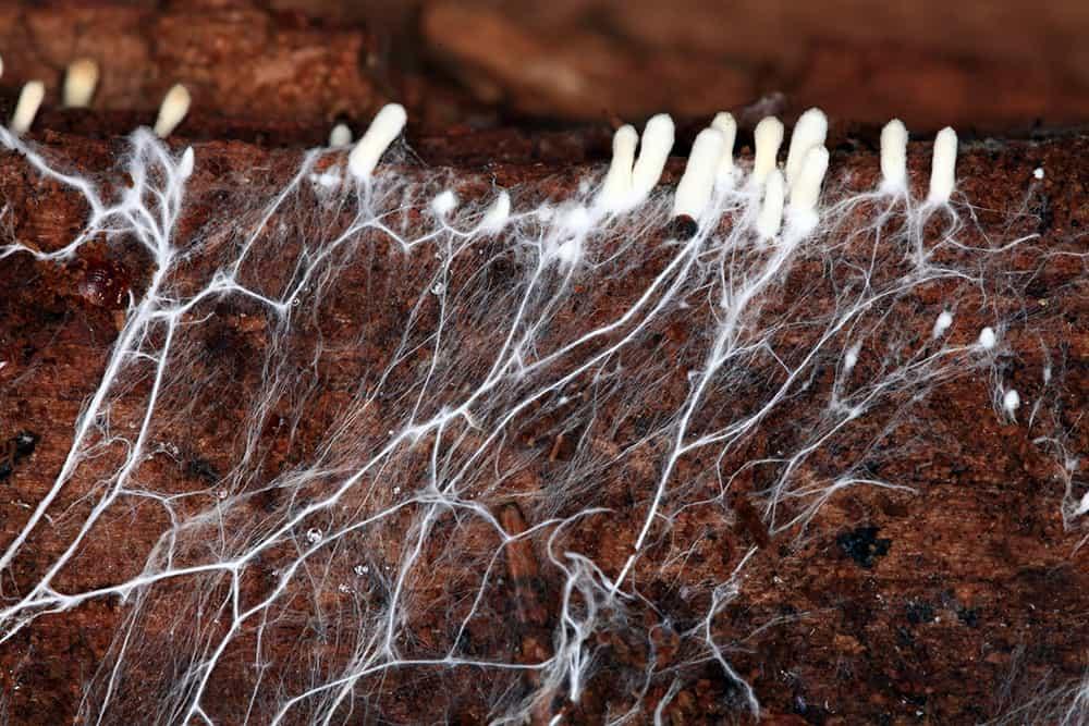 mycelium root network