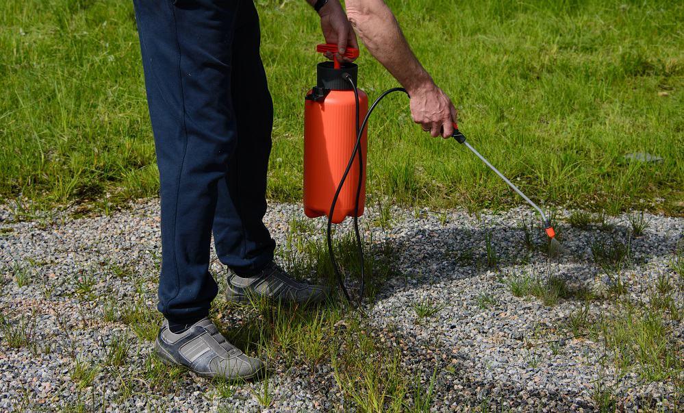 spraying weeds with ammonia